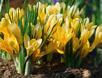 Wiosna w ogrodzie japońskim